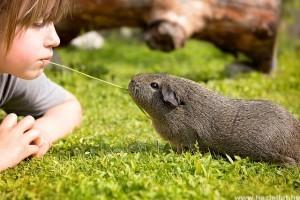 Gyermekbarát kisállatok: hüllő, madár vagy kisemlős?