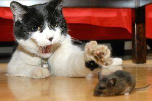 Macska-egér barátság