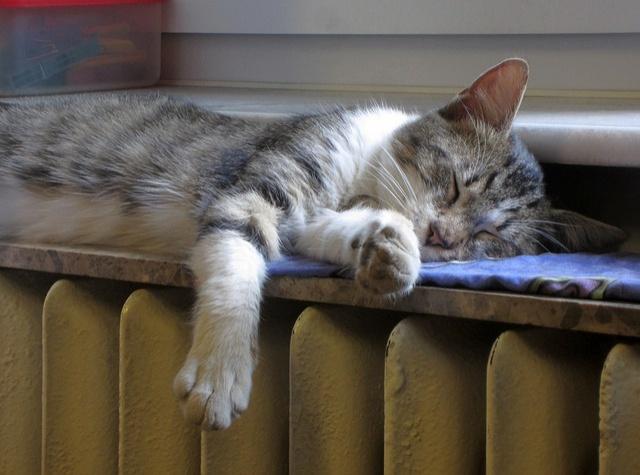 cat-1760731_640
