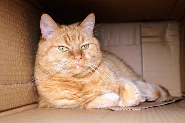 cat-1999679_640