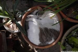 Hol szeret aludni a macskád?