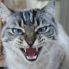 Nyávog a macskám! De egyfolytában!