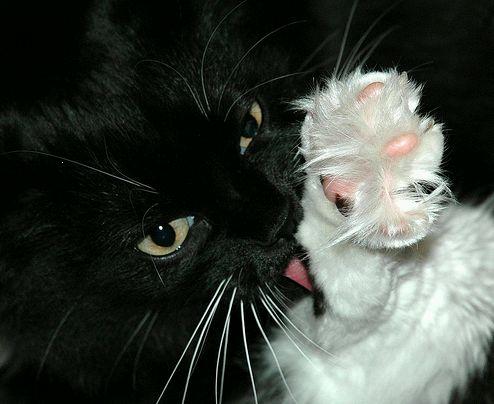 macskamosdás