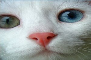 Topmodell a macskám!