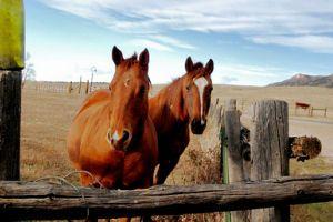 Mikor sunyít és bakol a ló?