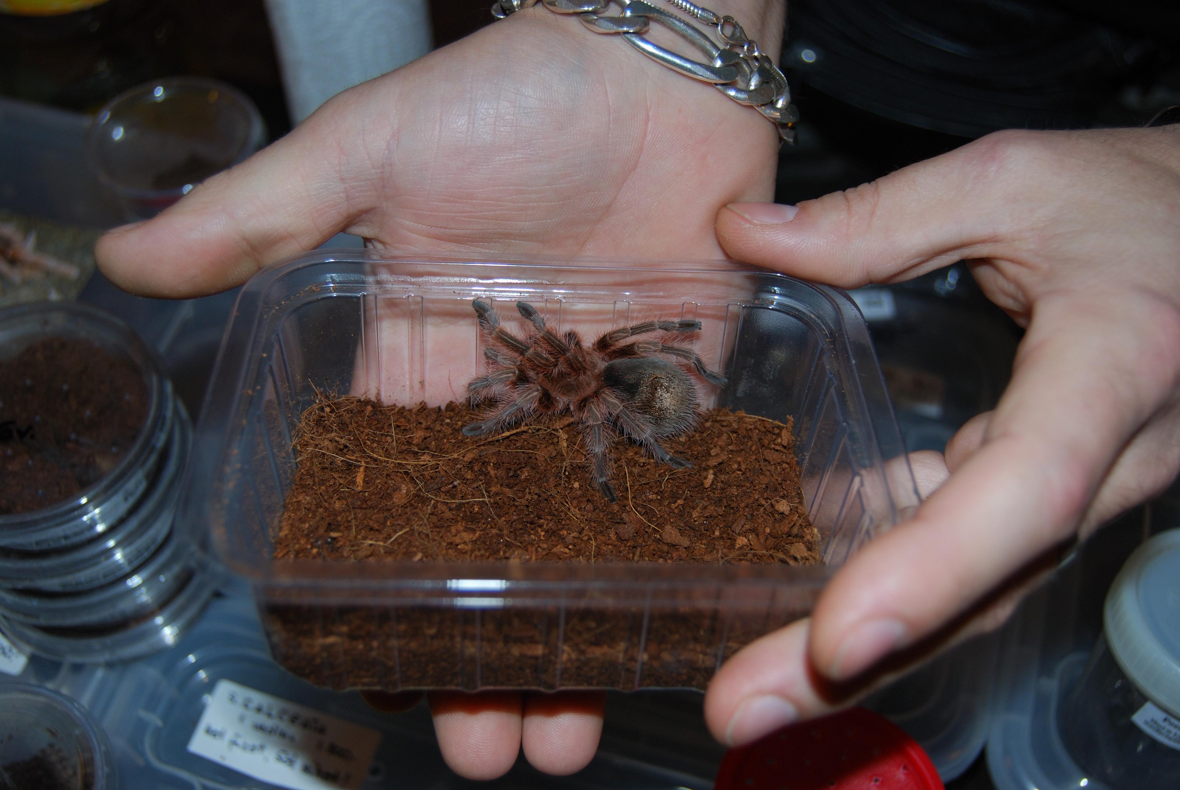pók kis terrárimban