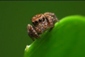 Kicsi vagy nagy? - 3 dolog, amire figyeljünk, ha pókot veszünk