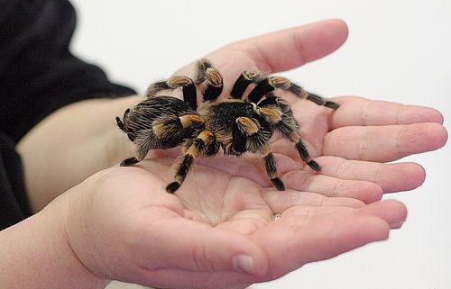 pók kézben