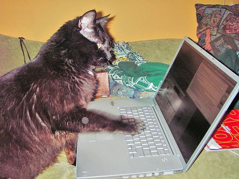 Macska számítógéppel