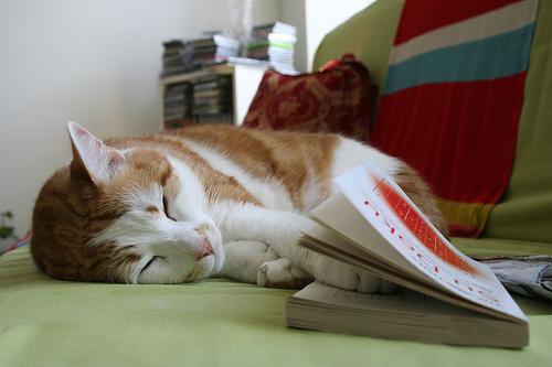 Macska könyvvel