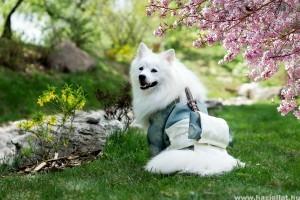 A felnőtt kutyák és a galandféreg – hogyan védekezzünk ellene?