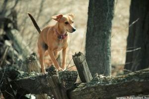 Ha elveszett a kutyád, minden a gyorsaságodon múlik