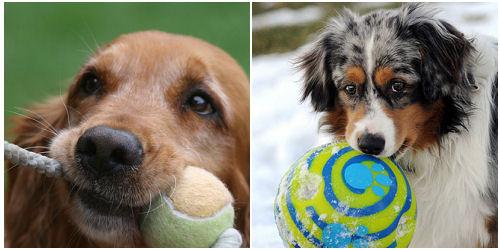 kutya játék, kutya labda