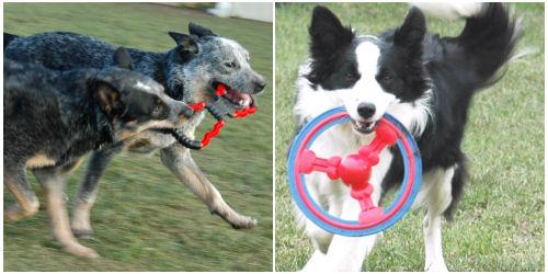 Kutyajátékok: frizbi és húzogatós játék
