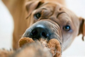Milyen a jó kutyajáték?