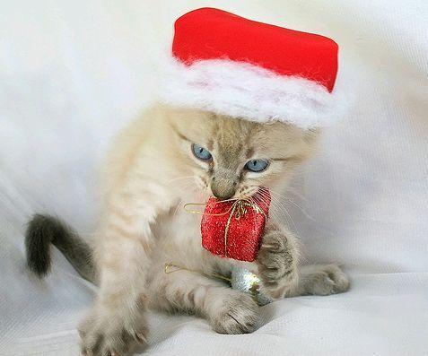 karácsonyi macska