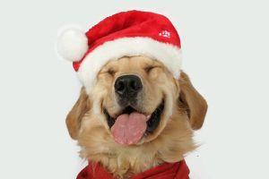 Állatorvosi tanácsok az ünnepekre