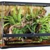 Hogyan tudjuk csökkenteni a hőséget a terráriumban?