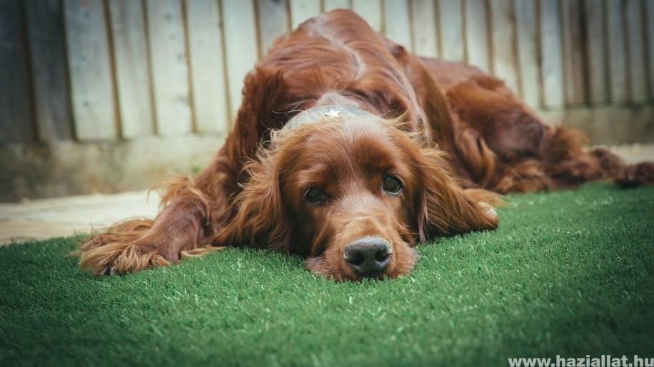 Miért ás a kutya, és mit tehetünk ellene?