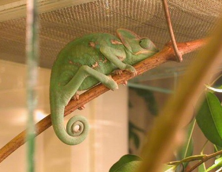 kameleon-terrariumok