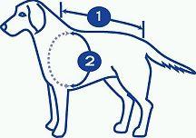 kutyakabát mérése