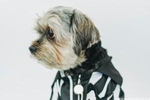 Milyen a jó kutyaruha? Milyen anyag méret és fazon a legjobb télen?