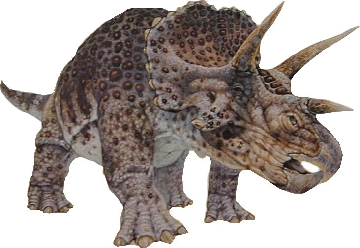 Triceratops, hüllő, dinoszaurusz