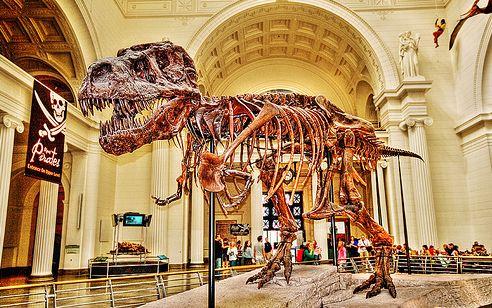 dinoszaurusz, őshüllő, kiállítás