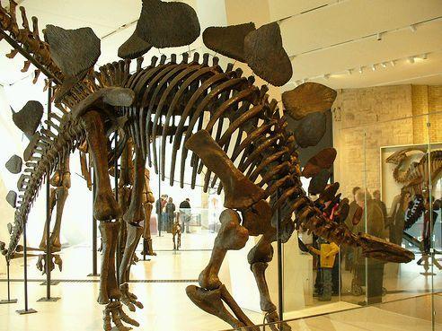 stegosaurus lelet