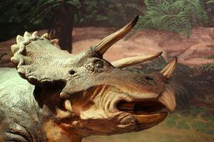 Kik azok a Dinoszauruszok? - Triceratops