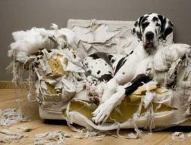kutya, dog, választás, fajta, kutya szétrágja, kutya nevelés, kutya idomítás