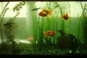 Hogyan készítsünk kólásüvegből vízszűrőt az akváriumunkba?