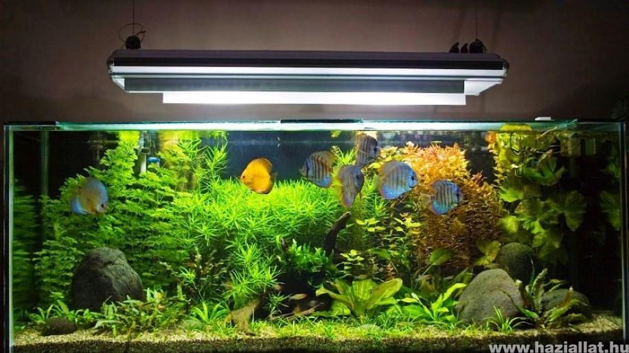 Hogyan készítsünk akváriumot házilag?