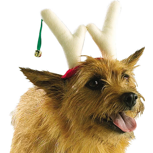 renszarvas-kutya