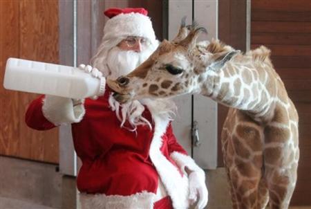 állatkert, mikulás, télapó