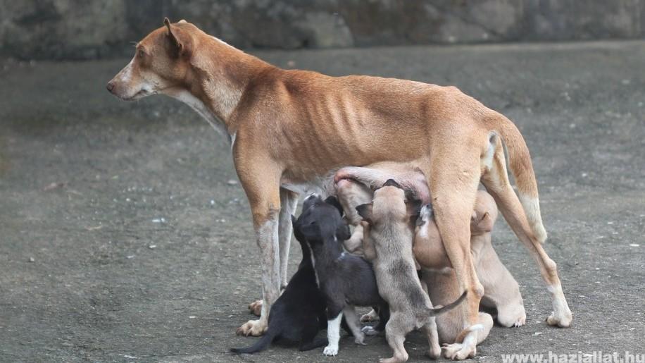 10+1 tévhit a kutyák ivartalanításáról