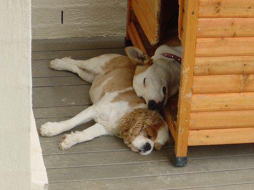 kutya-kennel
