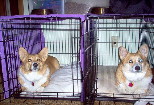 kutya-ketrec