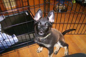 Miért és mire jó a szoba - kennel? - a kutyánk beszoktatása