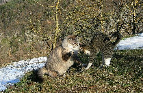 Macska testbeszéd