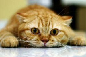 Na, mi a helyzet, Cicus? - a macska testbeszéde