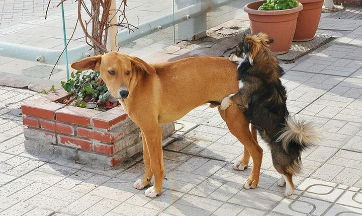 keverek_kutya
