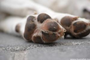 Kutyacipő: milyen típusút válasszunk, mikor lehet hasznos?