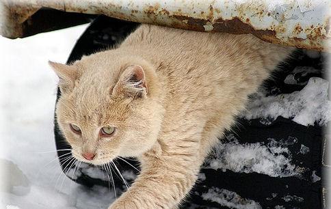 macska-ho