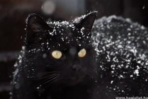Hogyan téliesítsük a cicánkat? - Simon macskája és az első hó