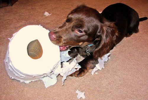 Rágcsáló kutyus
