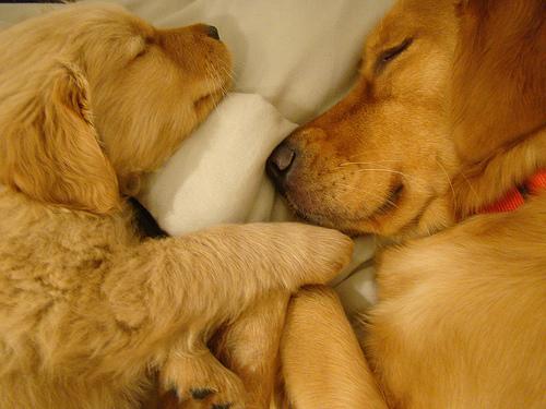 alvó kutyusok