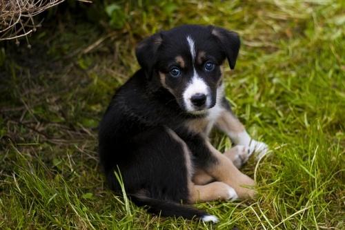 puppy-779287_640