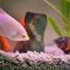 Akvárium karbantartás:vírus az akváriumban!