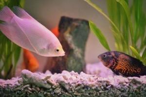 Akvárium karbantartás: vírus az akváriumban!